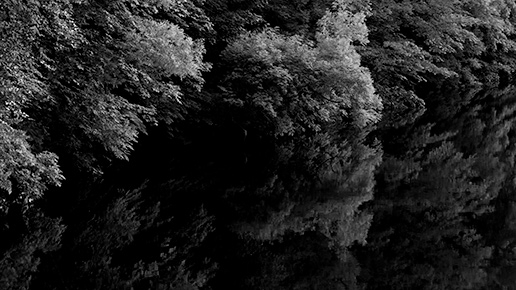 leaves of trees in black and white in wind, audiovisual research into auditory hallucinations,